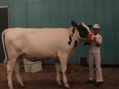 Jeremy Peruski showing his cow at 4-H in Sandusky, Michigan
